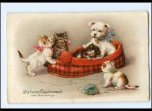 Y17647/ Geburtstag Katzen und Hund Litho AK ca.1925