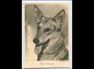 Y17655/ Deutscher Schäferhund Foto AK 1935