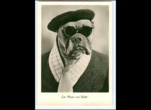 Y17657/ menschlicher Hund Boxer mit Brille Gunkel Foto AK
