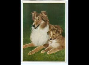 Y17653/ Hund Collie mit Jungen AK ca.1955-60