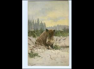 XX11158/ Haar- und Federwild Wildschwein AK ca.1905
