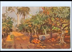 XX11880/ Vollbehr Künstler AK Kamerun Kakaoplantage Afrika Kolonien ca.1912