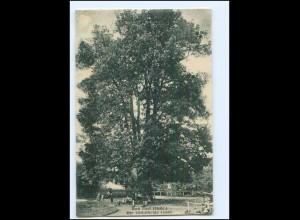 XX11657-998/ Bad Thal - Ruhla 500 järhige Linde Baum 1924 AK