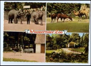 Y18083/ Wuppertal Zoo Tierpark AK 1963