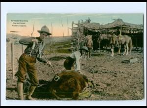 XX12944/ Western Canada Kanada Cowboy Branding - Cow in Corral AK ca.1910