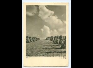 Y18980/ Ostland Heuernte Stempel: Danzig 1941 Foto AK