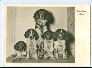 Y20630/ Cocker Spaniel Hunde Gunkel Foto AK ca.1935