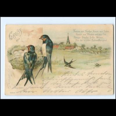 XX14069/ Vögel Schwalben Litho Gruß AK 1902