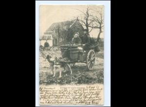 S2857/ Hundekarre Belgien Flandern Attelage de caiens flamand AK 1903