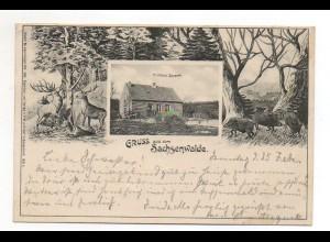 XX001292/ Gruß aus dem Sachsenwalde Forsthaus Saupark Ak AK 1900