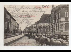 XX005408-171/ Gnoien i. Meckl. Hauptstr. Schafe AK 1903