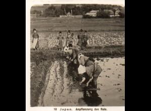 AK-2687/ JAPAN Anpflanzung von Reis NPG Foto Stereofoto ca.1905