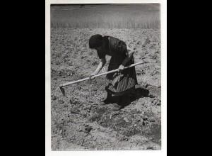 C3201/ Kartoffelernte Bäuerin auf dem Feld Landwirtschaft Foto 24x18 cm ca.1955