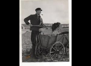 C3202/ Bauer verteilt Mist auf dem Felde Landwirtschaft Foto 24 x 18 cm ca.1955