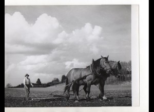 C3203/ Bauer mit Pferdepflug Landwirtschaft Foto 24 x 18 cm ca. 1955