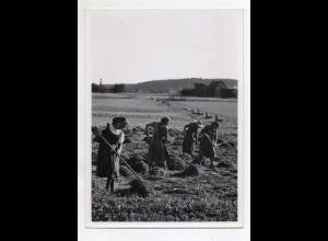 C3211/ Frauen bei der Öhmd Ernte Landwirtschaft Foto cm ca. 1955