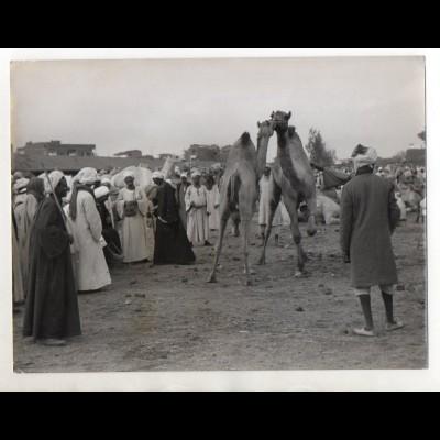 C3227/ Kamelmarkt in Embala bei Kairo Ägypten Foto 24 x 18 cm Pressefoto ca.1955