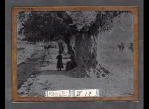 Y15534/ Altes Glasnegativ Ölberg Jerusalem Palästina ca.1900