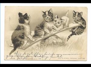 Y17392/ Katzen auf einer Wippe Litho Präge Ak 1902