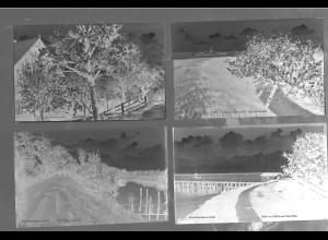 Neg5446/ 11 x Kirschenland altes Negativ 40/50er Jahre