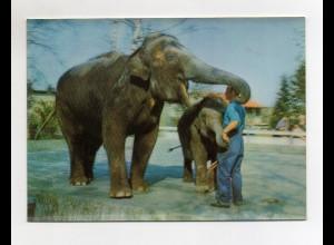 Y1301/ 3 D AK Elephants Elefant im Zoo Toppan Verlag ca.1970