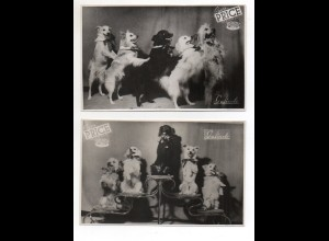 C2234/ 5 x Foto Hundedressur Galindo Zirkus Price Madrid ca.1950 17,5 x 11,5 cm