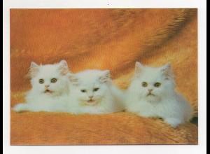 DP364/ 3 D Karte AK Katzen ca.1970