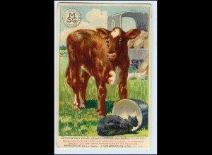 W5H71/ Landwirtschaft Kalb Kuh Ammoniak Reklame AK ca.1925